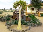 Old Cars and Giant Aloes at the Canon Roadhouse in Namibia
